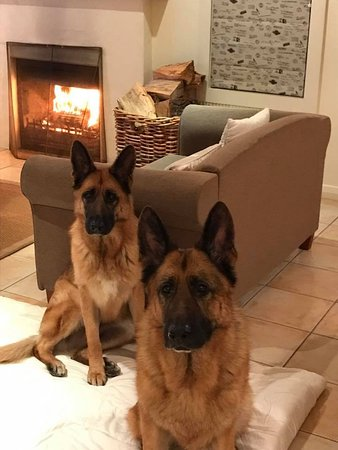 Martinborough, New Zealand: Our pups enjoying the roaring fire