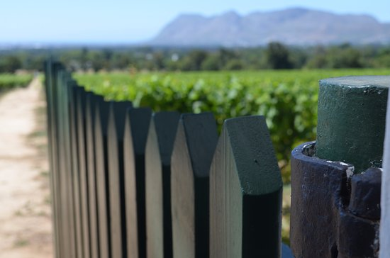 Constantia, South Africa: Winery