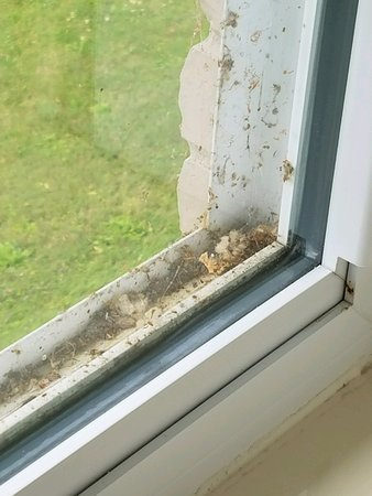 Χιούρον, Οχάιο: Window Sills BUG and Webs 2 ALL THE SILLS ARE LIKETHIS