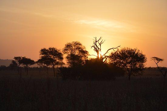 Way to see Serengeti