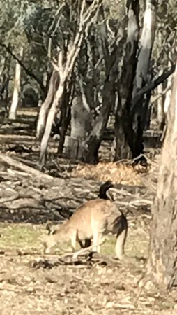 Barmah National Park: photo4.jpg