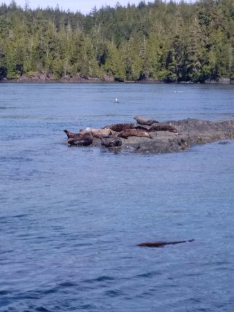 Heriot Bay, Canada: Some locals relaxing on a sunny afternoon.