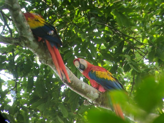 Carate, Costa Rica: Corcovado National Park