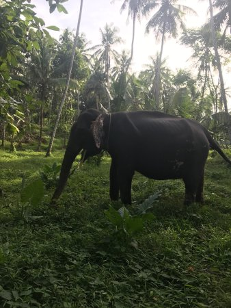 Kegalle, Sri Lanka: My one on one walk with Raminka🐘🐘