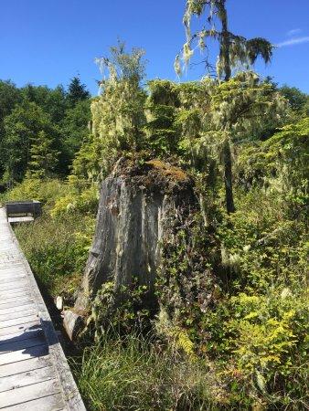 Alert Bay, Καναδάς: photo6.jpg