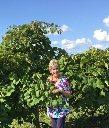 Ripley, OH: Checking out the vines