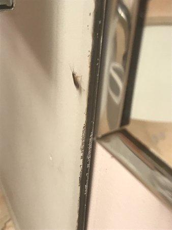 Opera Suites & Marina: cockroaches in bathroom