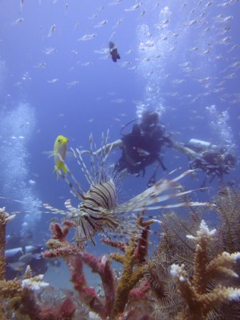 Merlin Divers - Kamala Diving Center: Niung was taking photos and filming and shared the pictures with us.