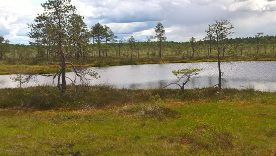 Wilderness Experiences in Soomaa National Park: Ein kleiner Teich im Hochmoor