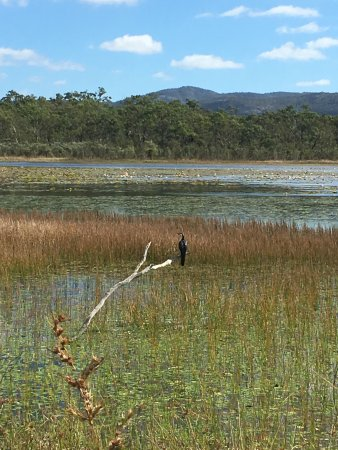 Mareeba Tropical Savannah and Wetland Reserve: photo0.jpg
