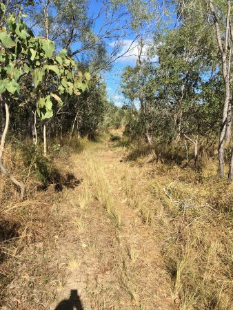 Mareeba Tropical Savannah and Wetland Reserve: photo3.jpg