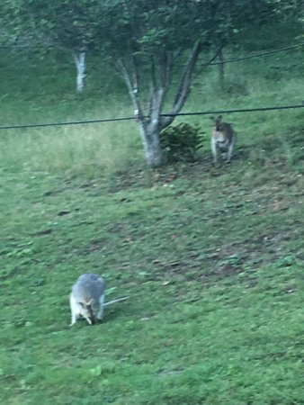 Canungra, Australia: photo1.jpg