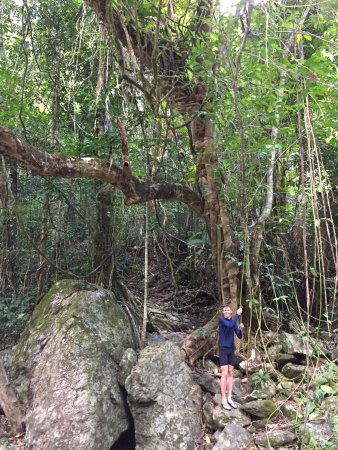 Redlynch, Australia: Kids thought the trees and vines were fun too.