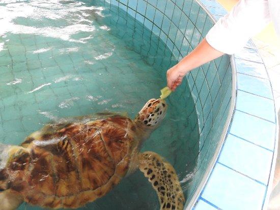 photo0.jpg - Bild von Royal Thai Navy Third Fleet Turtle Nursery, Khao Lak - ...