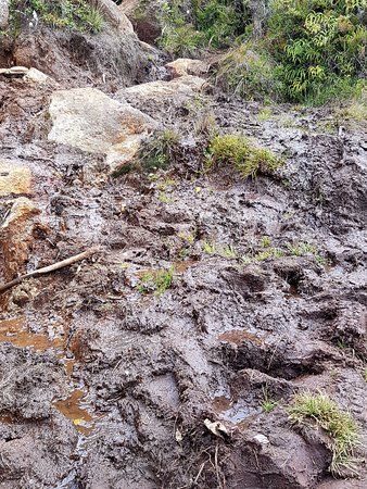 Mount Hagen, Papua New Guinea: Muddy sections in many parts of the trail