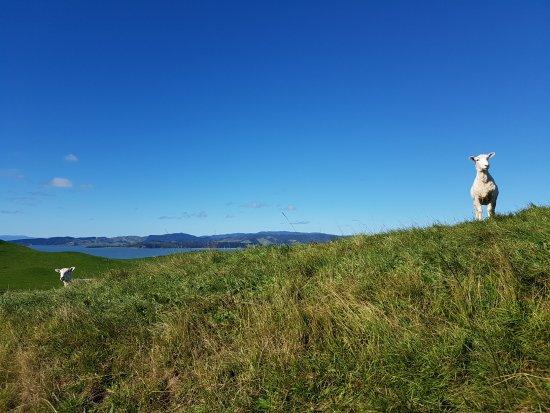 Howick, New Zealand: Duder park