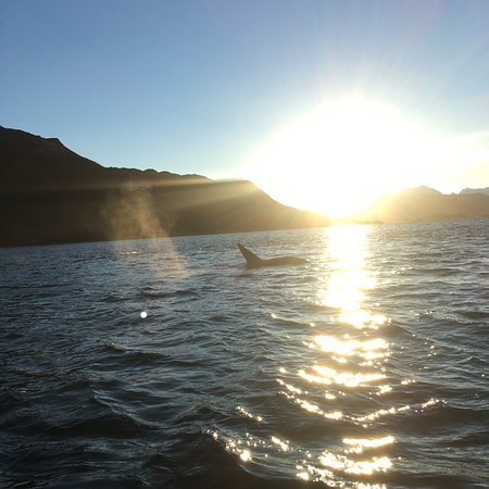 Arctic Adventure Tours : Orca and the sun coming up!