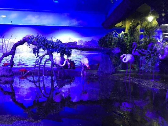 Crocus Oceanarium