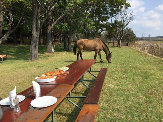 Waterberg, South Africa: Table is set for an out doors lunch