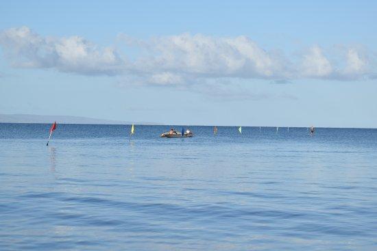 Kihei Sands Beachfront Condominiums : Local canoe Club practising in the morning
