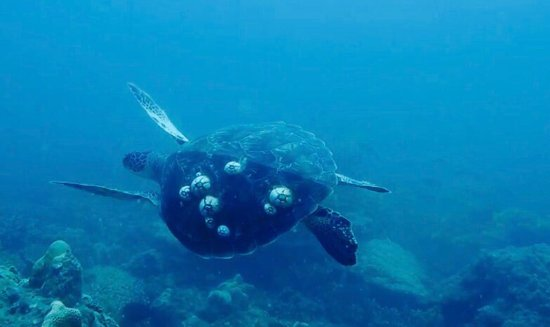 Con Dao Islands, Vietnam: Swimming with a turtle - always awesome.