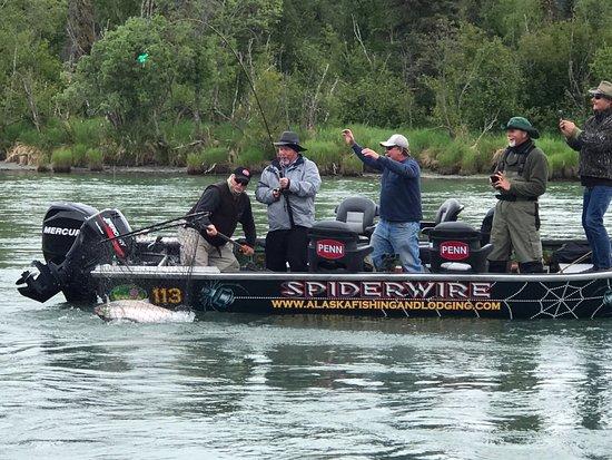 Alaska Fishing & Lodging: Netting a 49 1/2 inch King on the Kenai River 5 Mi. from AF&L
