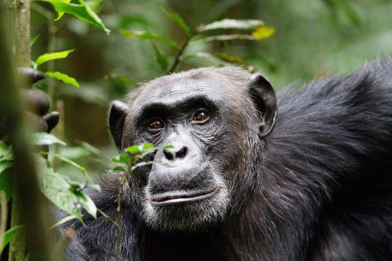 Muleni Safaris Uganda