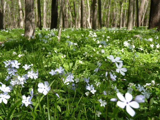Cedar Falls, IA: 340 acres of wildflowers and forest