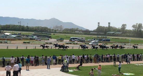 Hakodate Horse Racetrack : 向こうに見えるのは函館山。