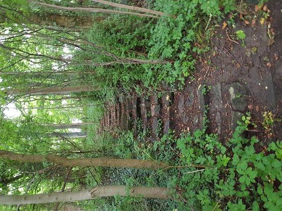 Slagelse, Danmark: Var flott her, synd det ligger så nærme motorveien, men man kan gå en liten tur i vakker skog. O