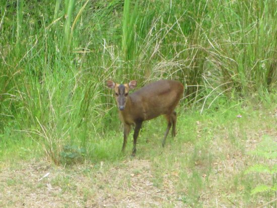 Westleton, UK: In the Woods at Minsmere