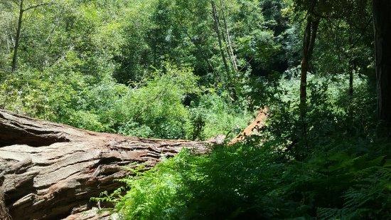 Forest of Nisene Marks State Park : Lush vegetation