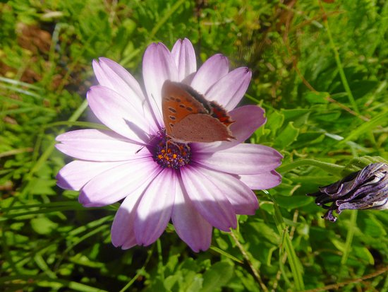 Grèce-occidentale, Grèce : Macro photo of butterfly on flower in Katakolon Harbour