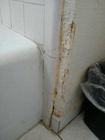 แวคาวิลล์, แคลิฟอร์เนีย: Bathroom wall near the bathtub