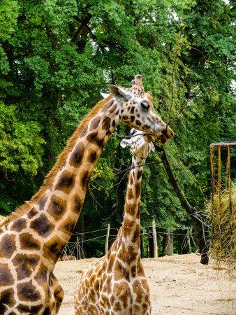 Zlin, Çek Cumhuriyeti: žirafa