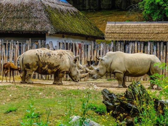 Zlin, Çek Cumhuriyeti: nosorožec