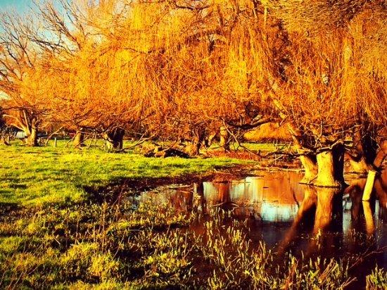 Mornington Peninsula, أستراليا: on the road - wet lands