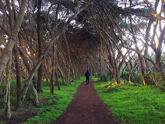 Mornington Peninsula, أستراليا: walks galore
