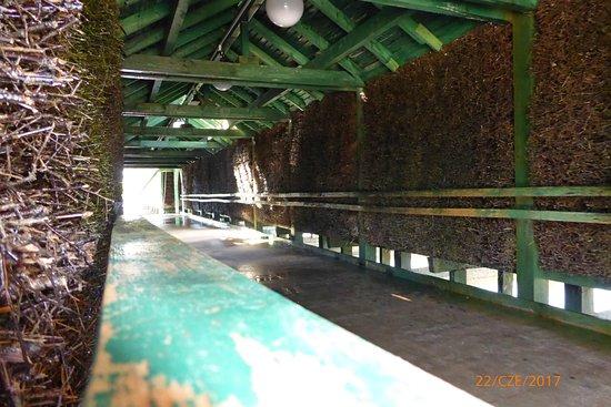 Goldap, Pologne : Tunel między dwoma kapiącymi ścianami.