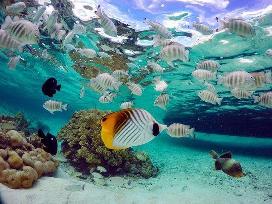 Tikehau Ninamu Resort ภาพถ่าย