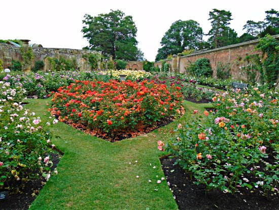 Hever Castle Gardens The Rose Garden