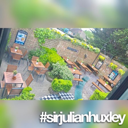 ‪‪Sir Julian Huxley‬: Bright and sunny beer garden‬