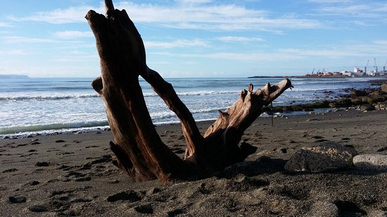 Napier, New Zealand: Large Driftwood