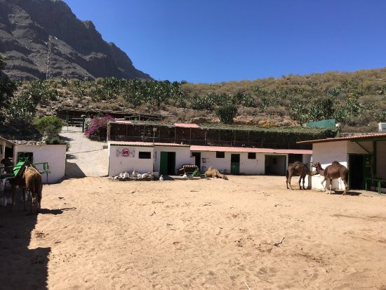 Camel Park Arteara : photo0.jpg