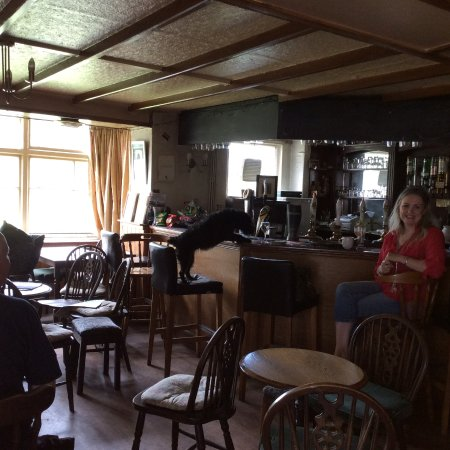 Romaldkirk, UK: Millie the dog playing the beer mat game