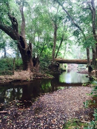 Imbil, Australia: Brooloo Park
