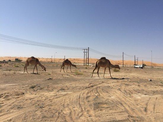 Al Hawiyah oasis Picture of Wahiba Sands AshSharqiyah