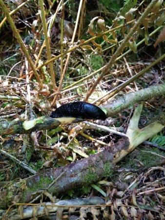 Port Alberni, Canada: Slug