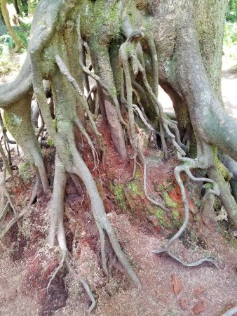 Port Alberni, Kanada: roots
