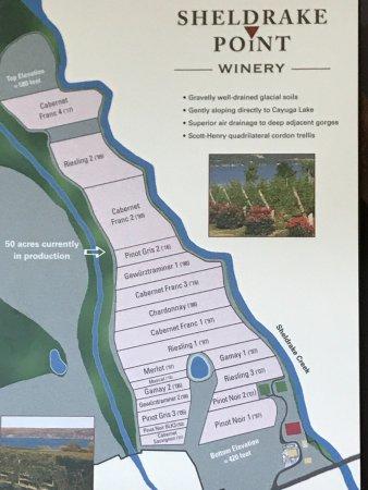 Ovid, Nowy Jork: Map of Sheldrake Point Winery